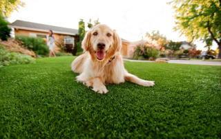 Un chien heureux sur du gazon synthétique