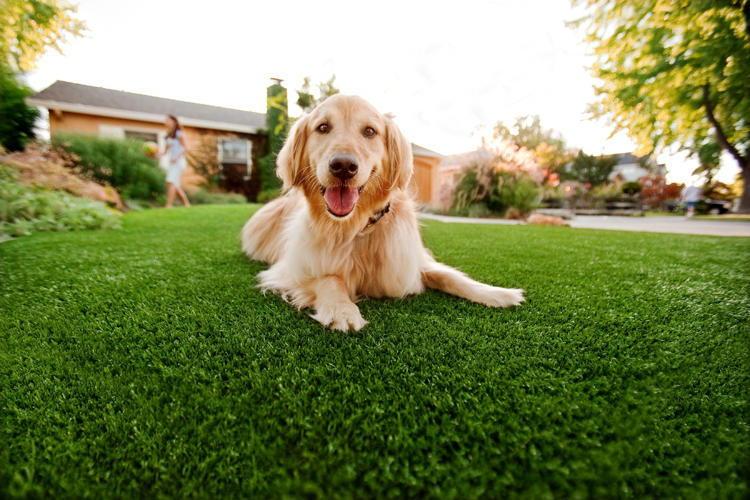 gazon artificiel urine chien