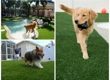 chiens-gazon-synthetique