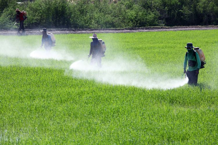 Gazon artificiel pesticides