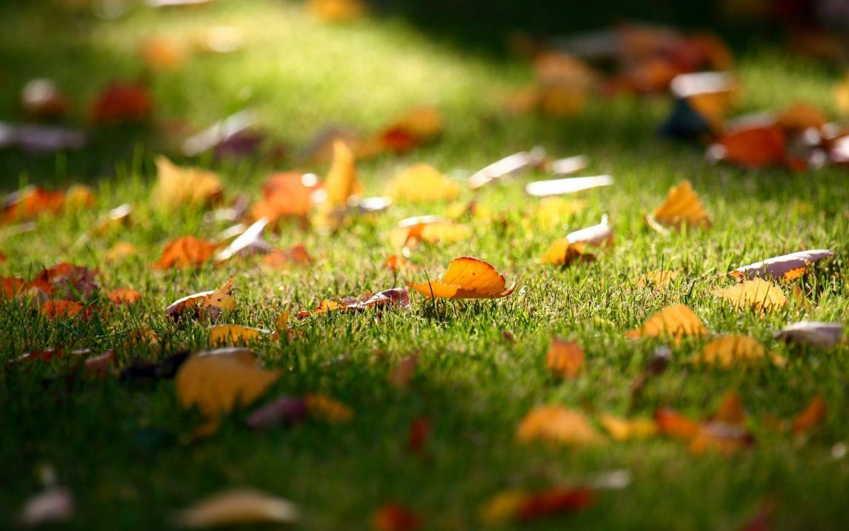 Gazon synthétique et feuilles mortes
