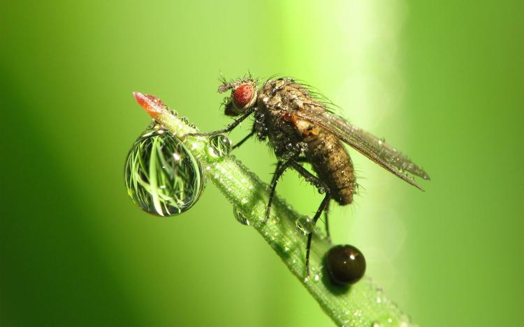 Gazon synthétique insectes