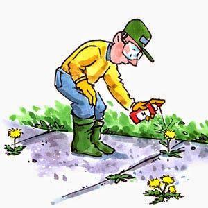 Conseils pour bien appliquer l'herbicide